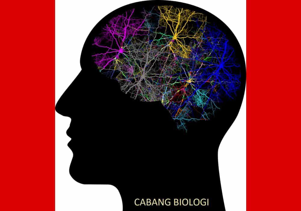 Cabang Biologi Pengertian Dan Contoh Ilmu Yang Mempelajari Apa Biologi