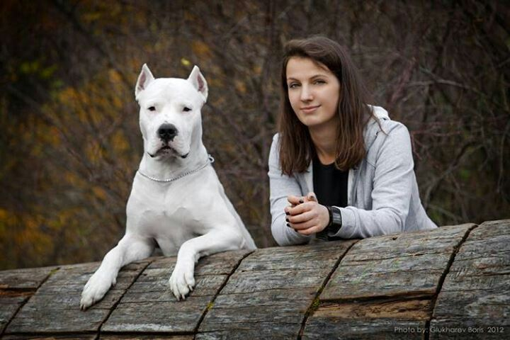 Dogo Argentino Dog Argentino Working Dogs Dogs