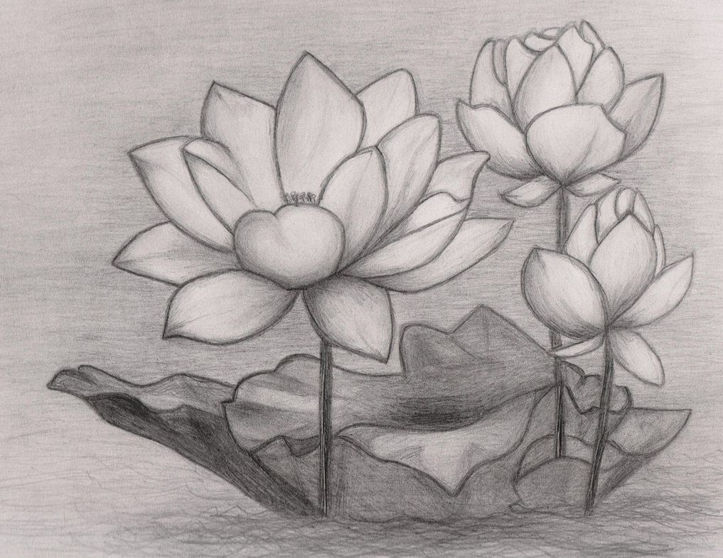 japanese lotus flower drawing - Google Search | 2 ...