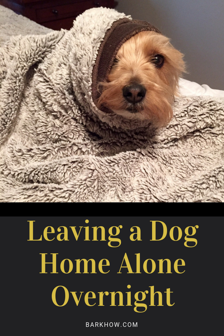 Leaving a dog home alone overnight Dogs, Dog care, Bored dog