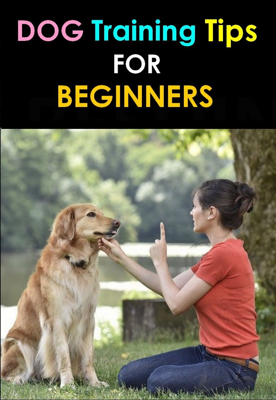Download Dog Training Tips For Beginners Pdf Videos