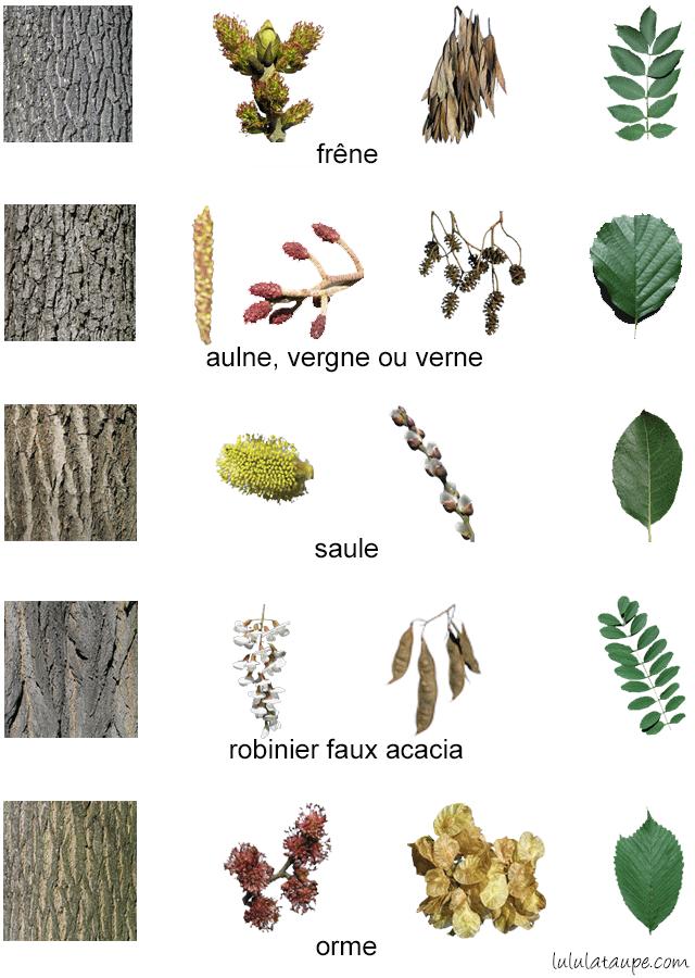 Très 3 fiches pour apprendre à reconnaître les arbres de la forêt. Pour  QP39