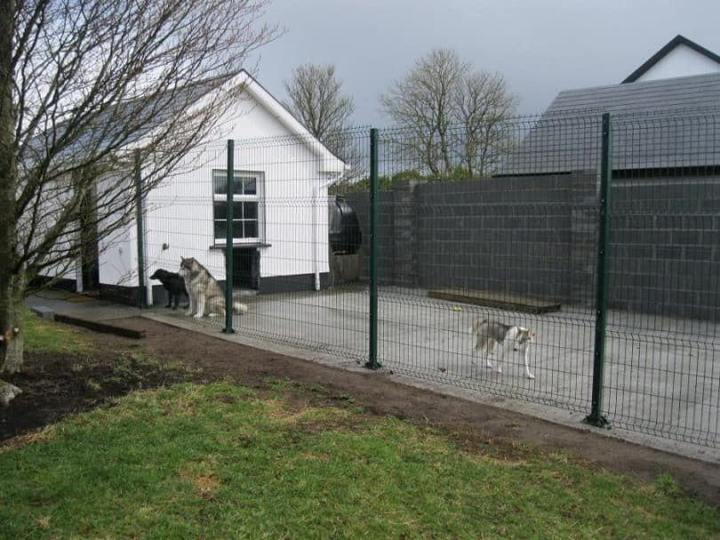 How to Build A Dog Run: Making The Perfect Enclosure for ...