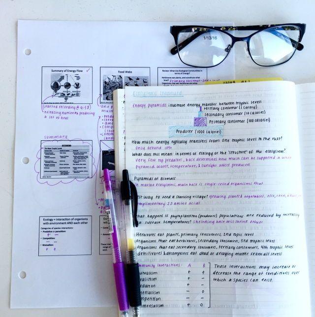Nyc doe homework help