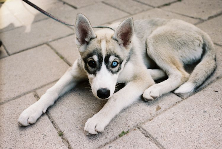Pup Erik Wahlstrom Animals Pinterest Animales Perros And