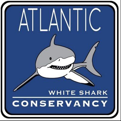Atlantic White Shark Shark conservation, Shark, Great