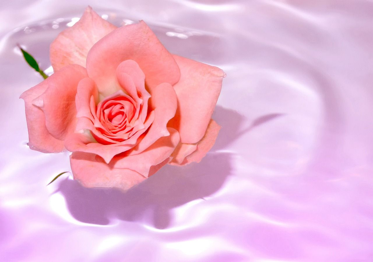 장미에 물들었을까, 함께 분홍으로 피어오르는 물