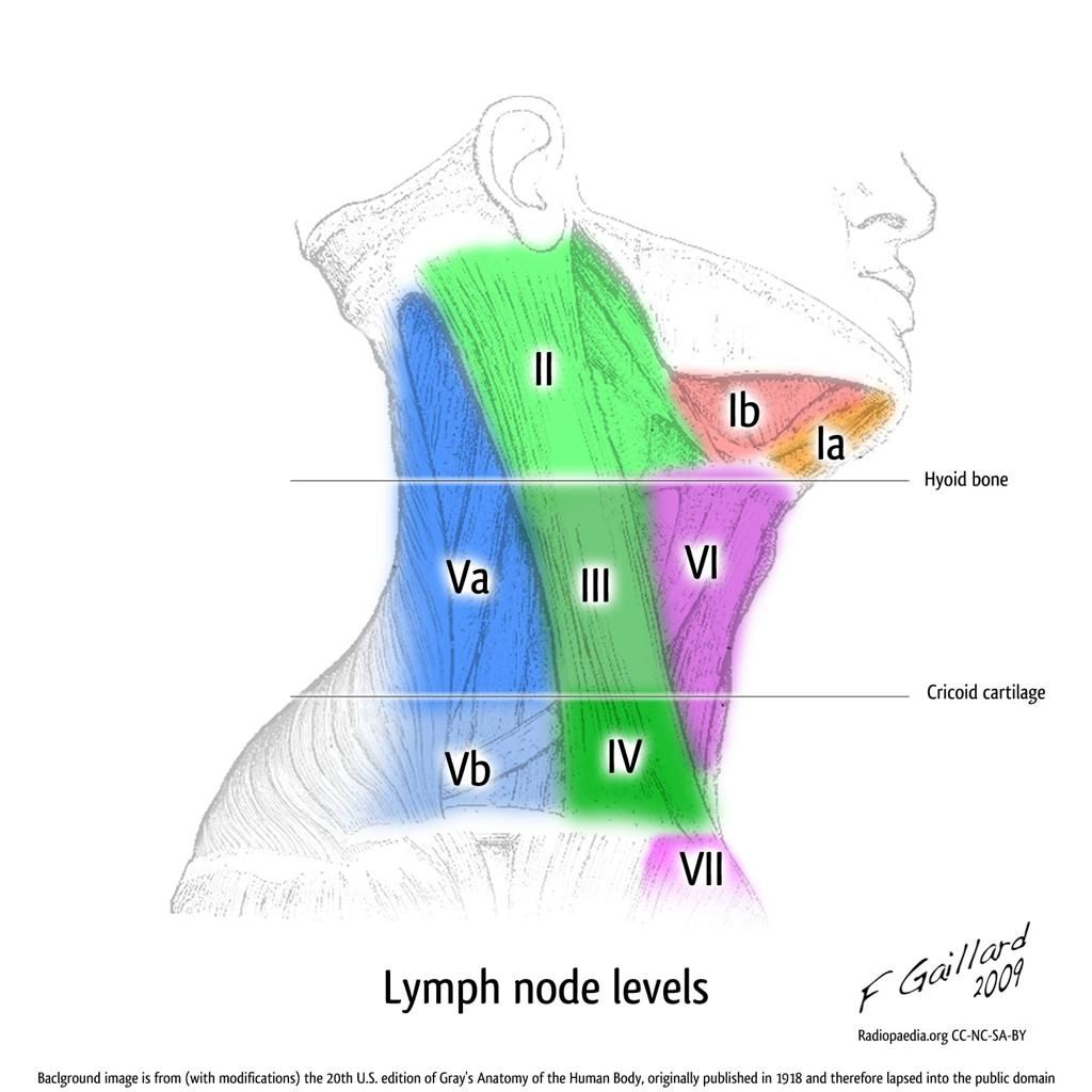 Lymph nodes of head and neck anatomy