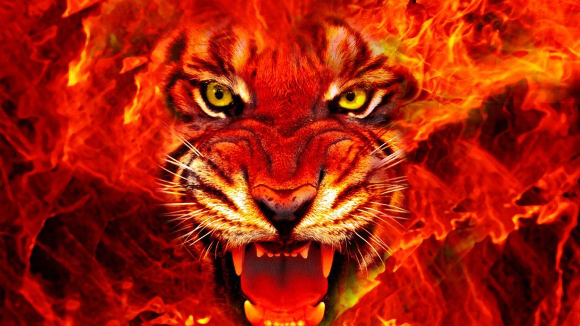 Fire wallpaper harida best hd wallpapers fire - Phone wallpapers fire ...