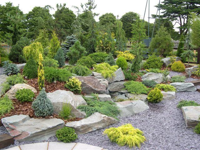 Coniferas buscar con google for Gartengestaltung joanna