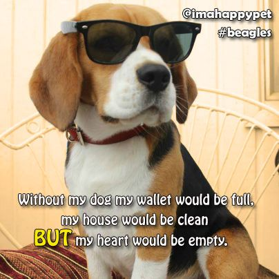 Cool Dogs Beagles Pet Companies Dogs Happy Animals
