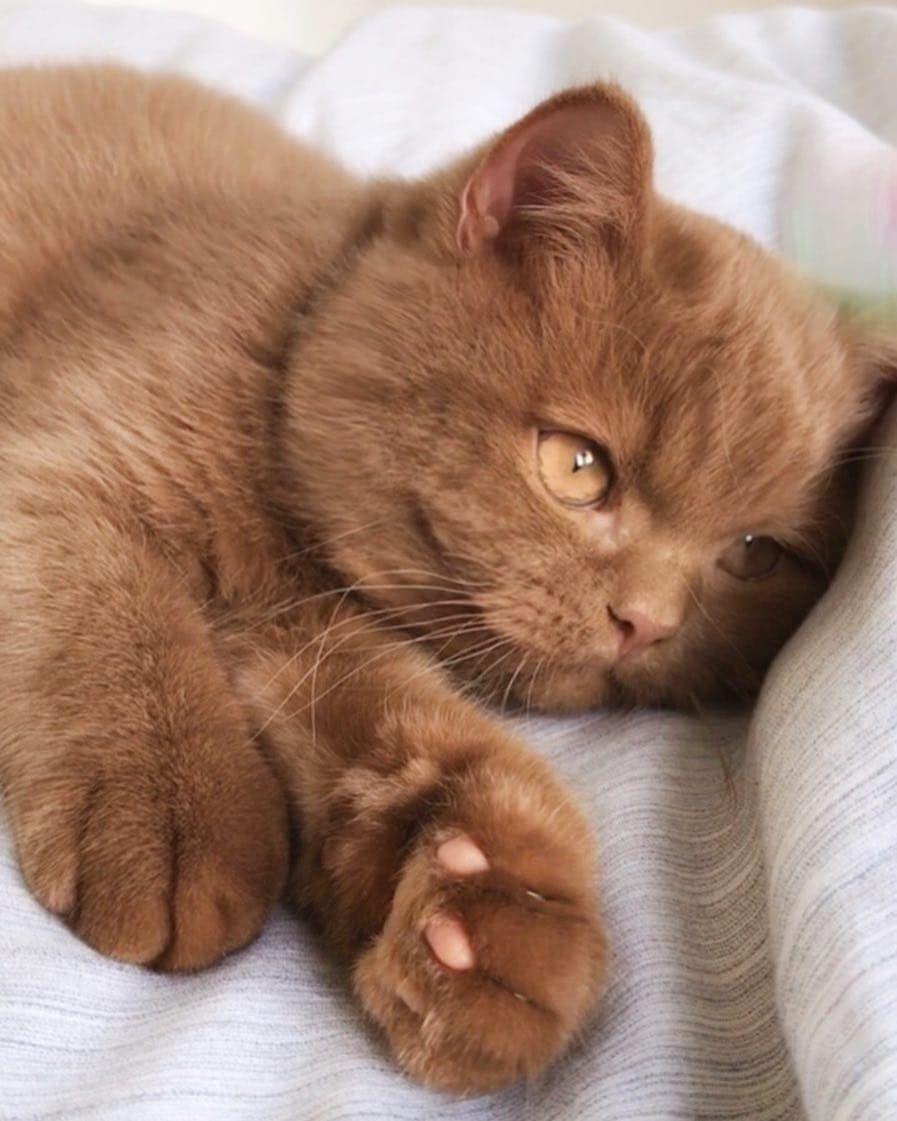 Pin On Kucing Cat
