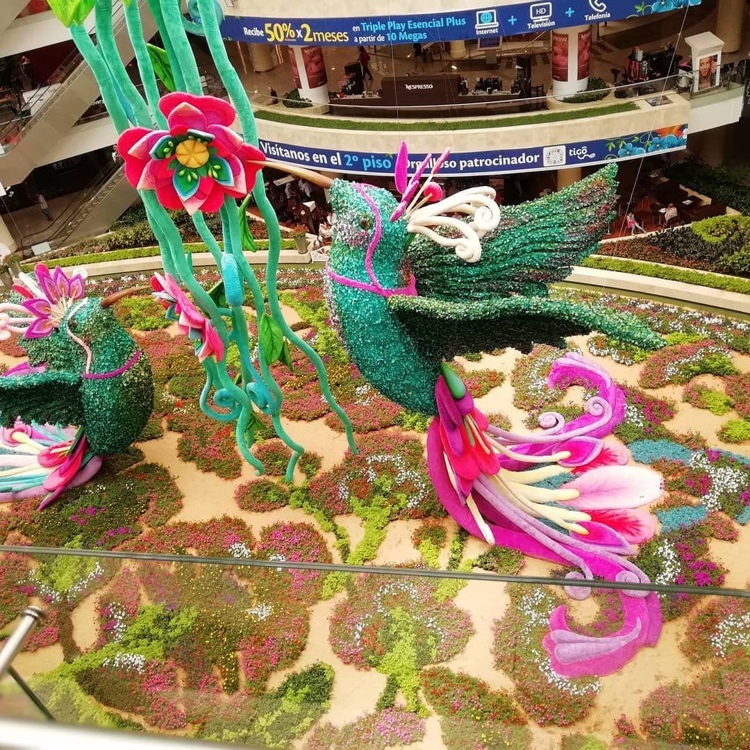 Feria De Las Flores En Medellin Feria De Las Flores Flores Feria