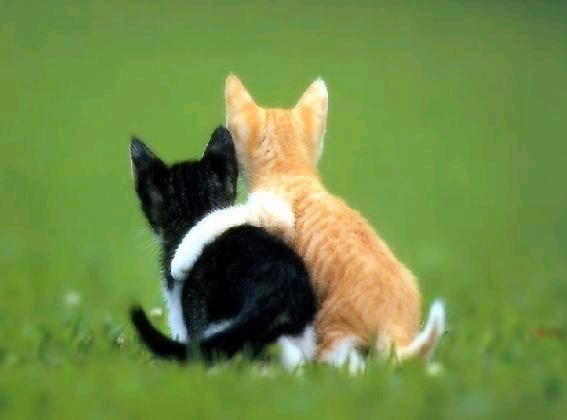 photo de chat trop drôle