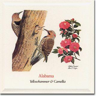 Alabama Botanical Illustration Vintage State Birds Alabama State