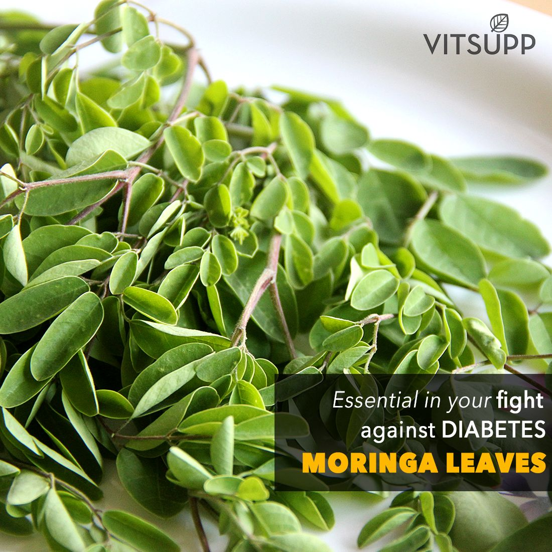 Drumstick Leaves Flowers Seeds Health Benefits And Side Effects Moringa Leaf Powder Moringa Moringa Leaves