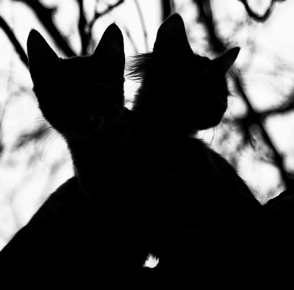 Untitled In 2020 Cat Shadow Cats Cats And Kittens