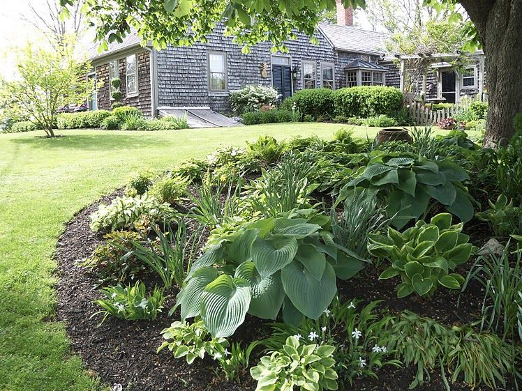 Landscape under a maple tree in the front yard cities for Plants around trees landscaping