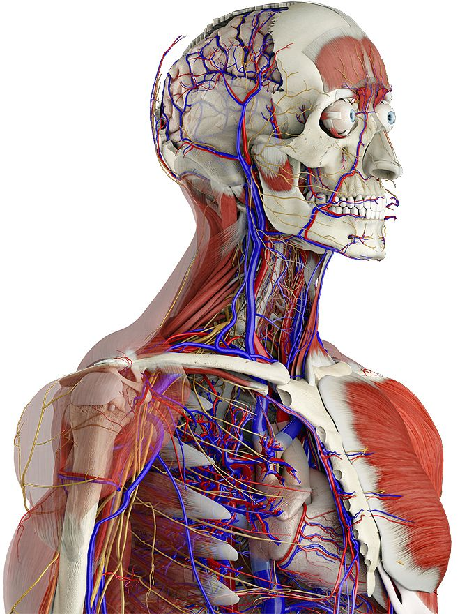 Body Apps 3d4medical Software Pinterest 3d Anatomy And Medical