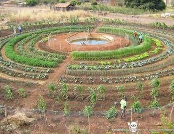 simbolo da agroecologia - Pesquisa Google