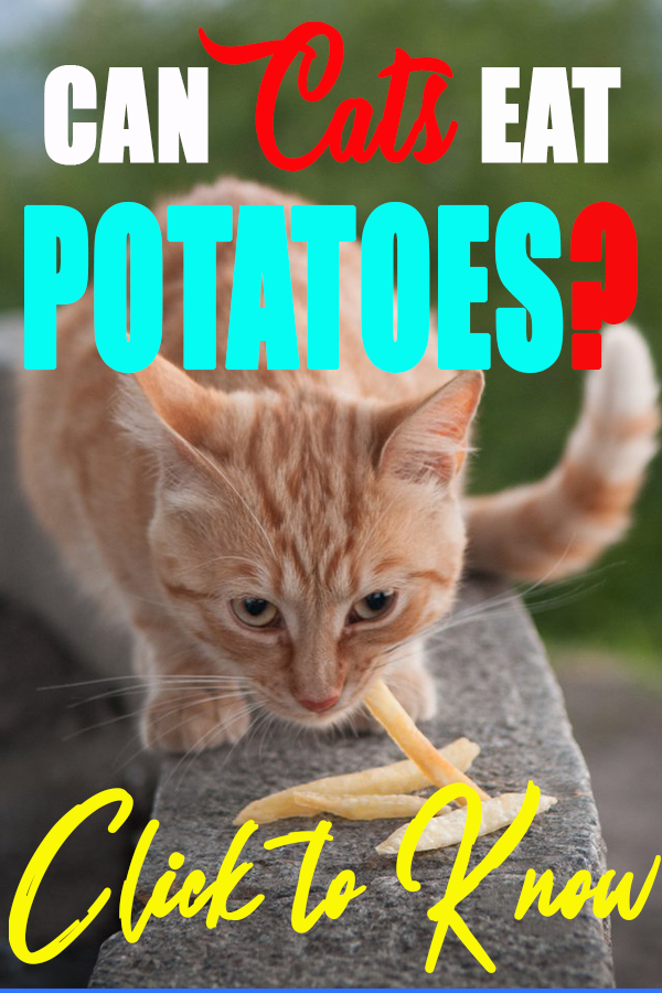 Can cats have French fries? in 2020 Cats, Can cats eat