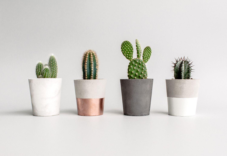 Planters Concrete Cacti Minimini Concrete Planters Cacti Succulent Planter Cactus Flower Cacti And Succulents