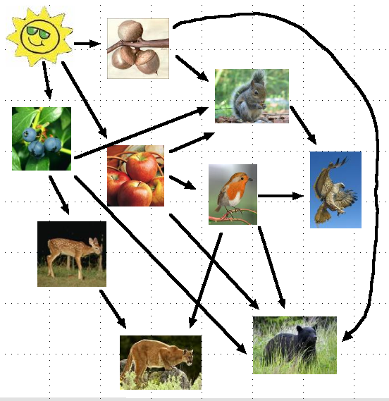 food chain of deciduous forest Food Web in the Temperate