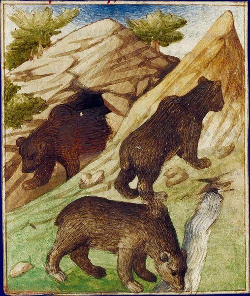 Bestiaire Du Moyen Age Bestiaire Art Historique Art Medieval