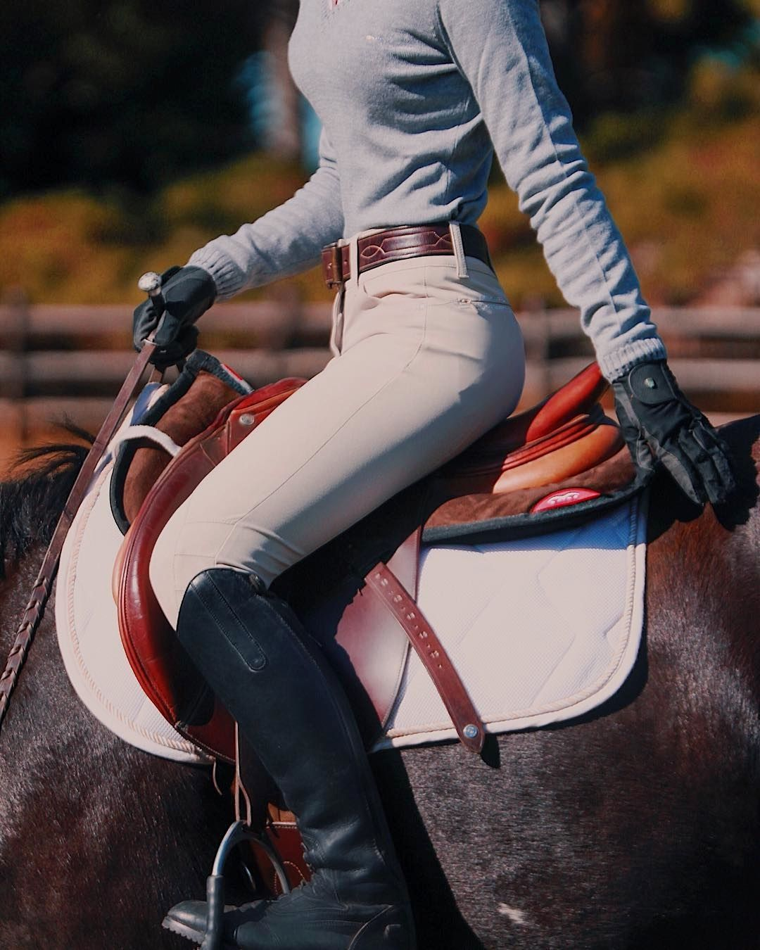 Horse Showing Equestrian Outfits Horse Riding