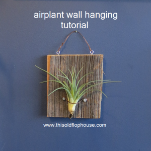 Airplant Wall Hanging Tutorial Reclaimed Barnwood Mounted Air Plant Living Art How To