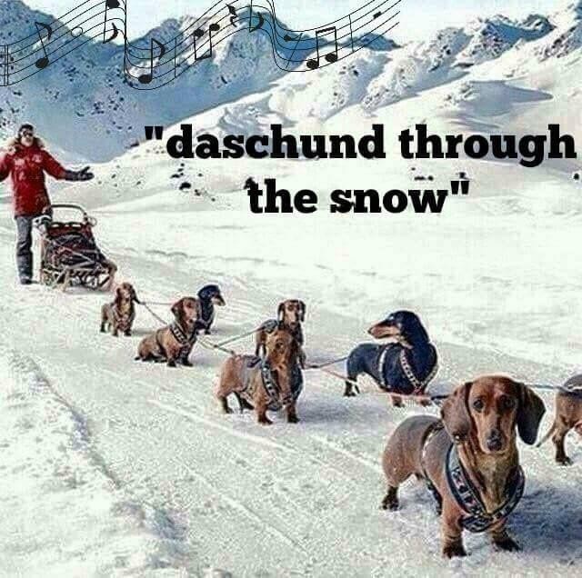 Daschund Through The Snow Dachshund Dog Dog Sledding Weiner Dog