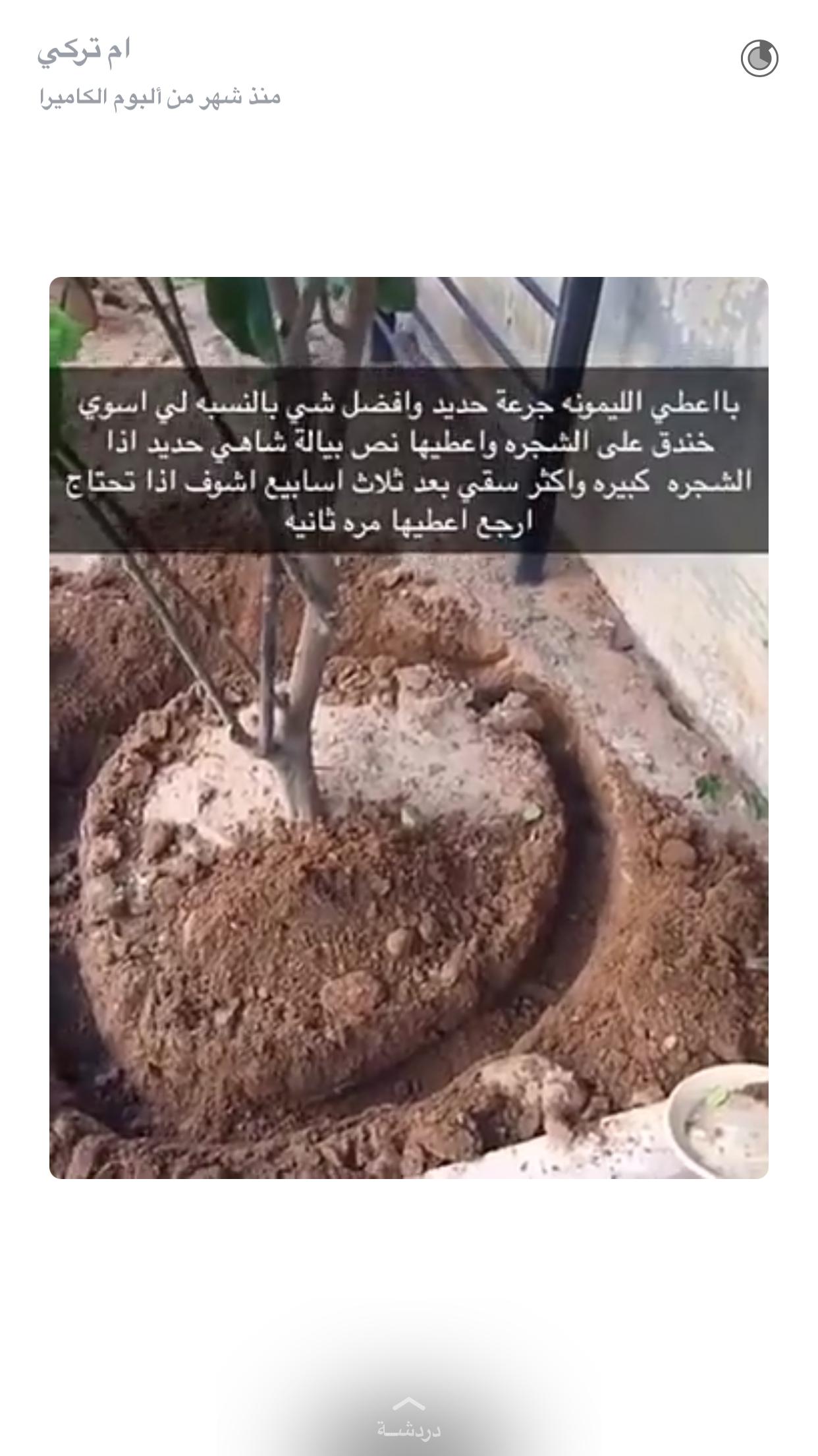 Pin By Doha Salem On نباتات داخليه Indoor Plants Diy Plants Plant Decor