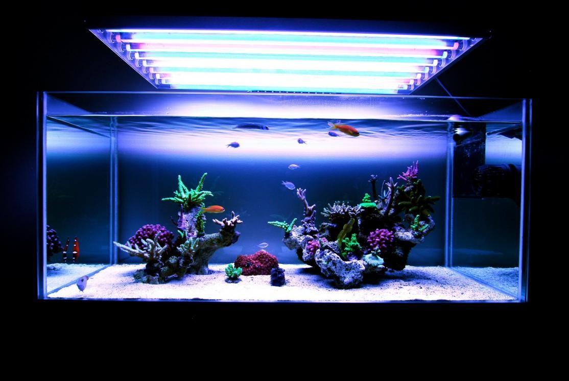 Aquarium Setup, Glass Aquarium, Marine Aquarium, Reef Aquarium, Aquarium  Ideas, Nano Reef Tank, Saltwater Tank, Aquascaping, Coral Reefs