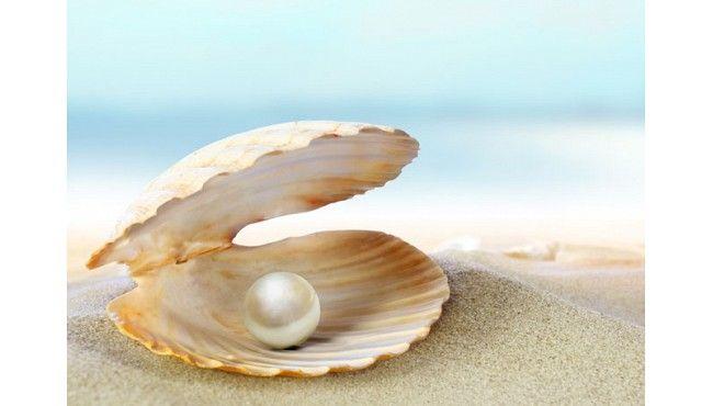 conchas do mar - Pesquisa Google
