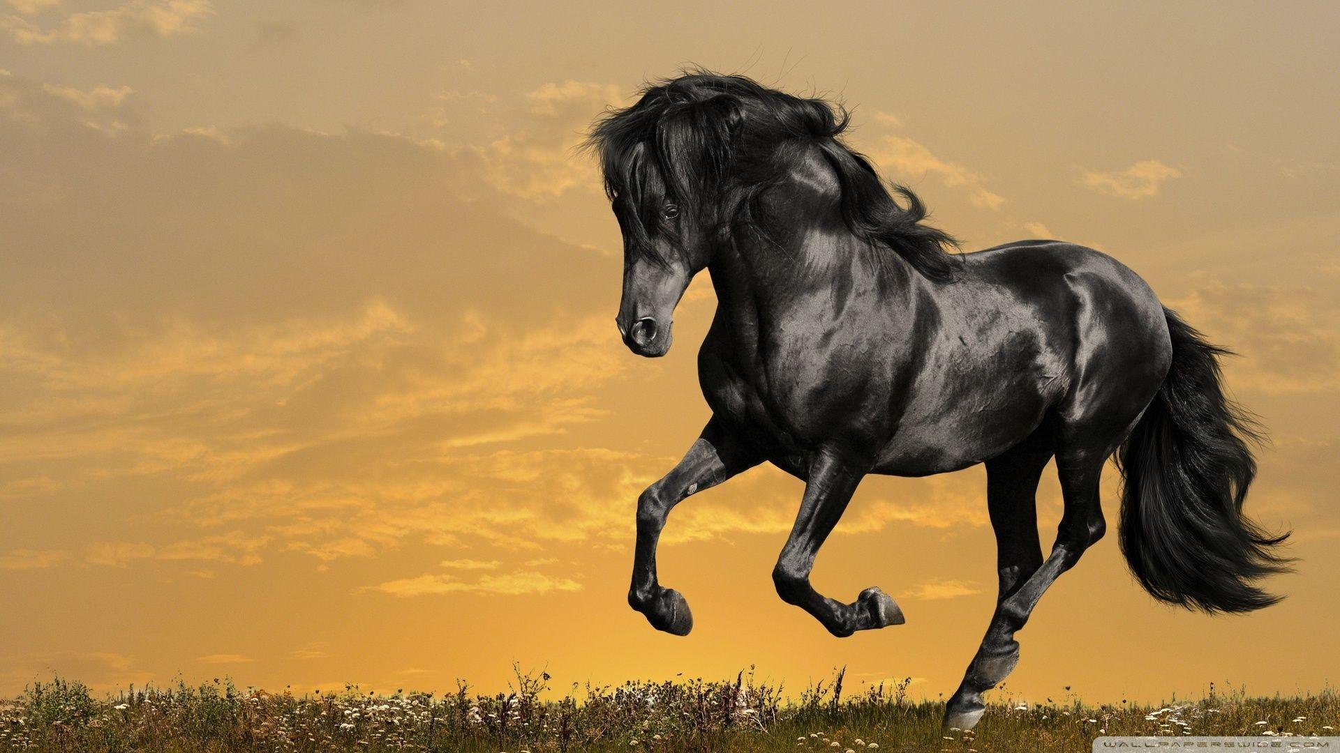 Running Horse Hd Wallpaper Download High Quality Wallpaper Buddy