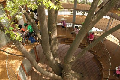 Ring Around a Tree by Tezuka Architects - Kindergarden Treehouse playground
