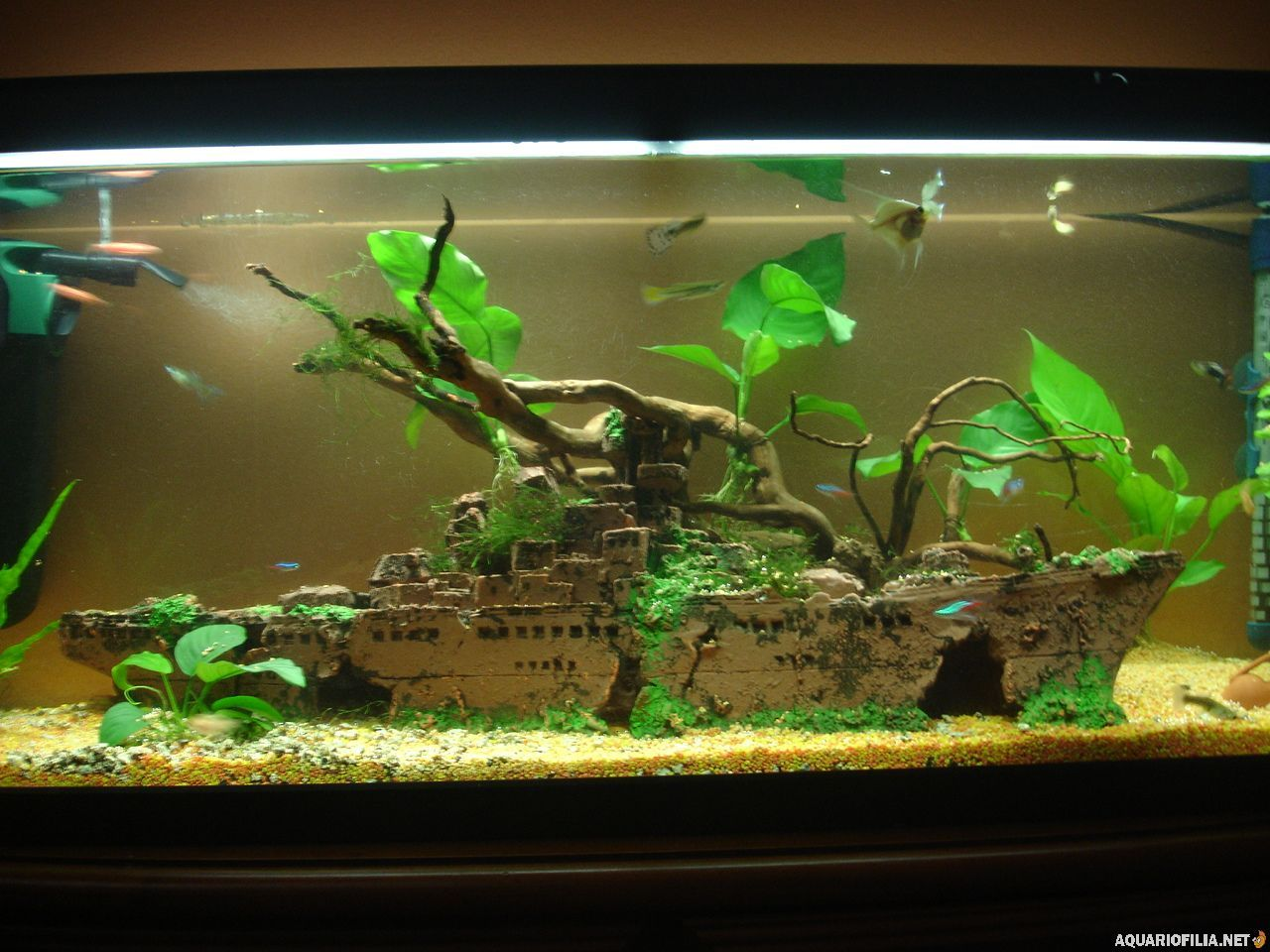 Imagem aquarium pinterest aquariums