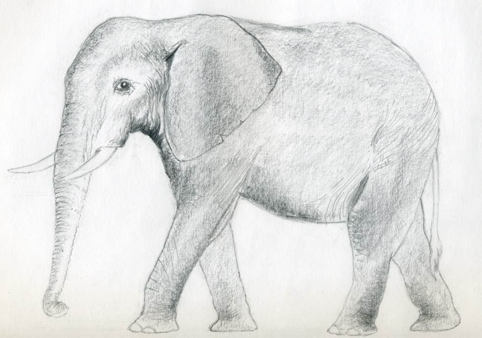 Draw an elephant of your choice in amazingly simple way