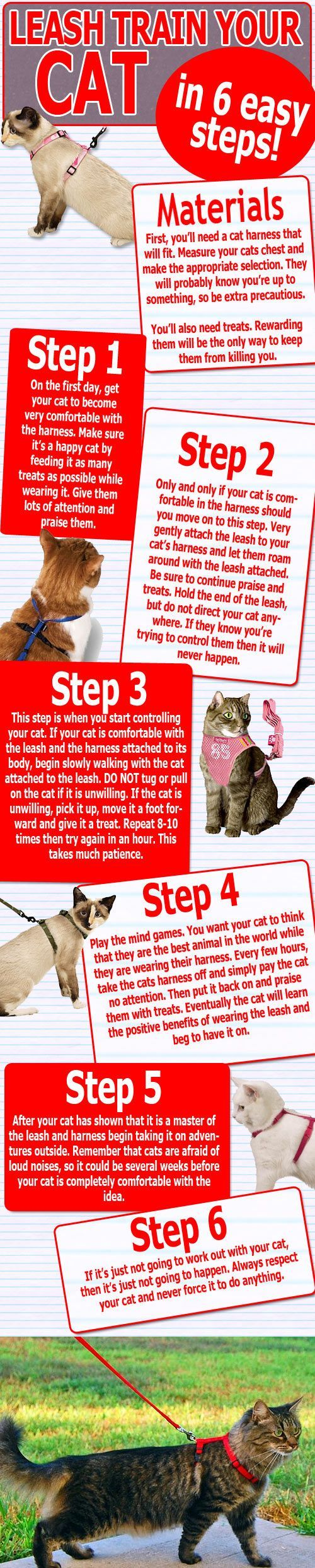 If You Ve Ever Wanted To Teach Your Cat How To Walk On A Leash This Helpful Infographic Shows You In 6 Easy Steps Crazy Cats Cat Care Leash Training