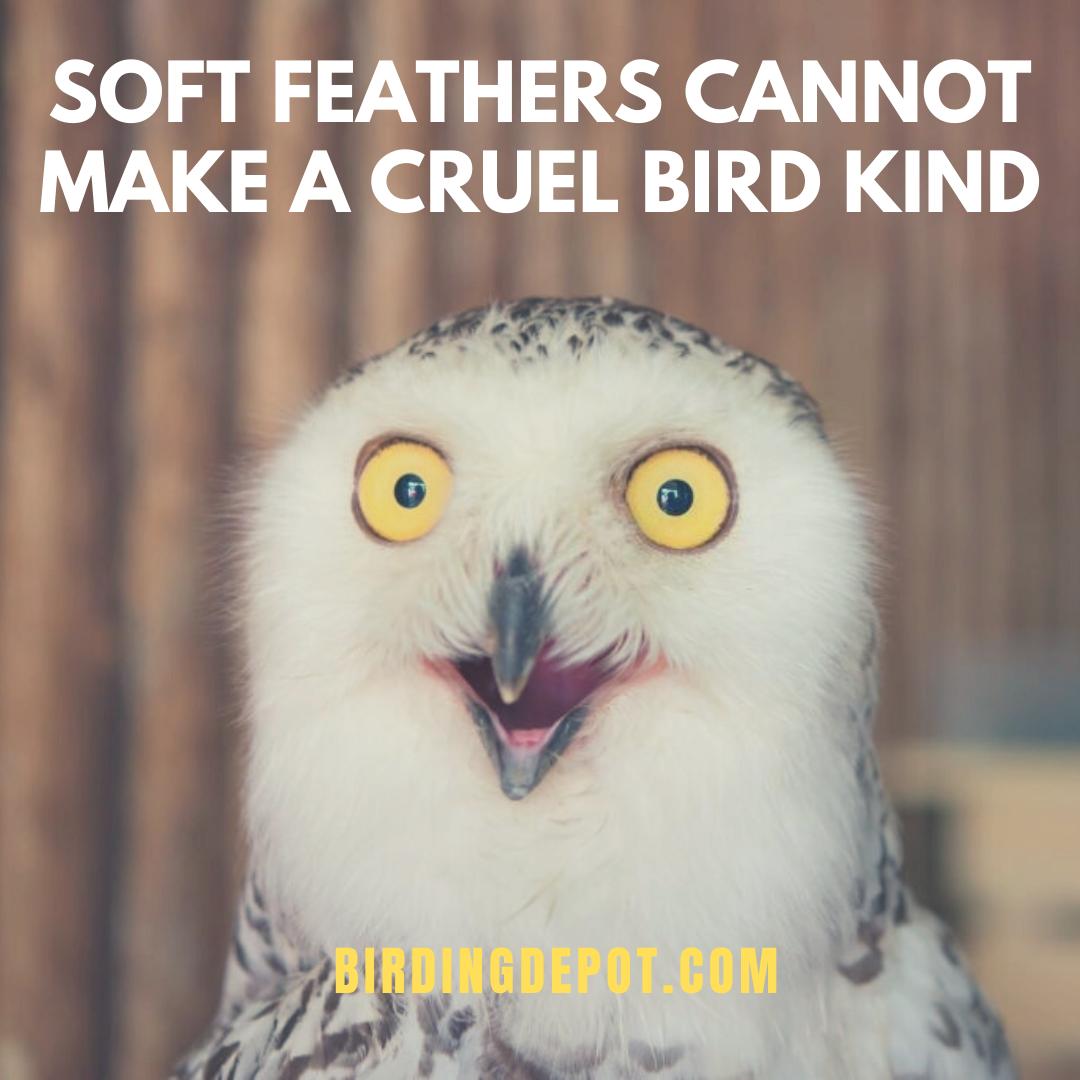 Soft Feathers Love You Meme Animals Cute I Love You