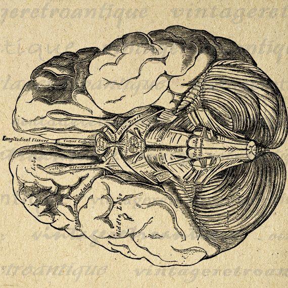 Brain Digital Printable Image Medical Diagram Graphic Anatomy ...