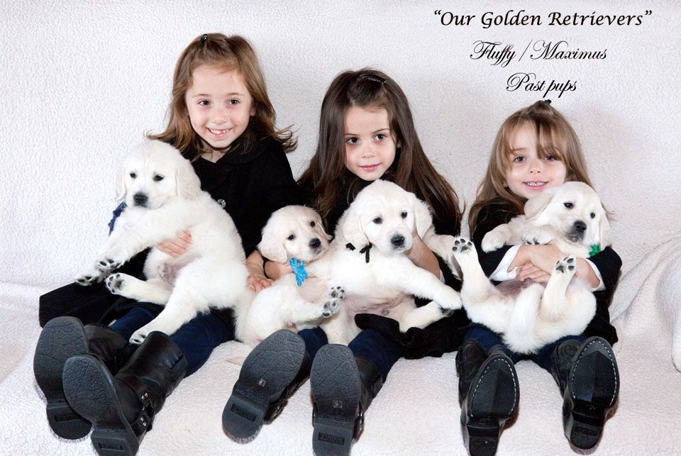 White golden retriever puppies texas