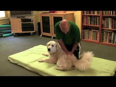 Dog Massage Demonstration By Nick Scott At The Ojai School Of