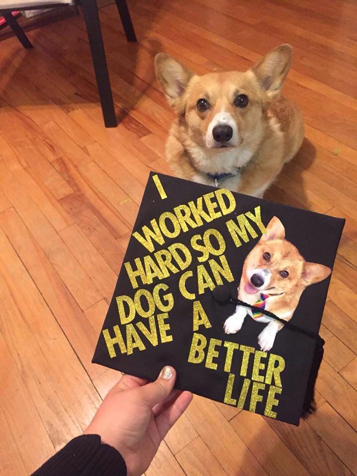Corgi Gold Glitter Dog Grad Cap Grad Caps Grad Cap Graduation