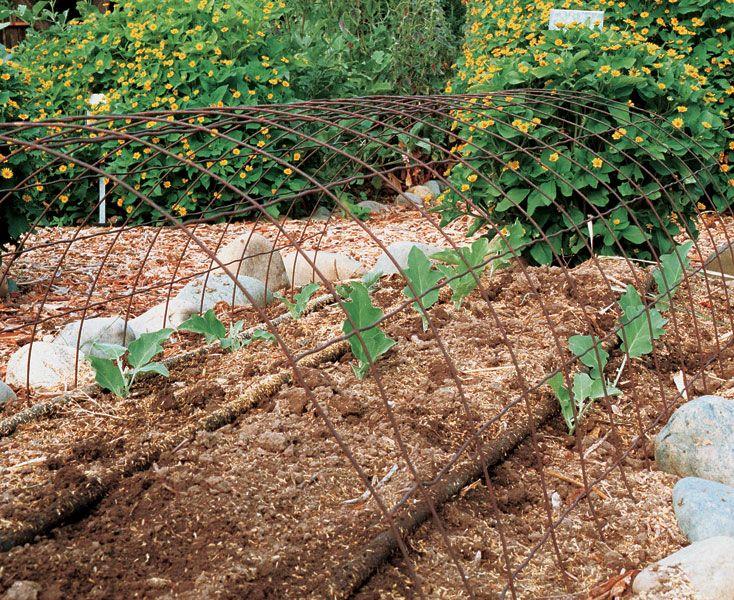 Growing Eggplants Successfully | Fine Gardening