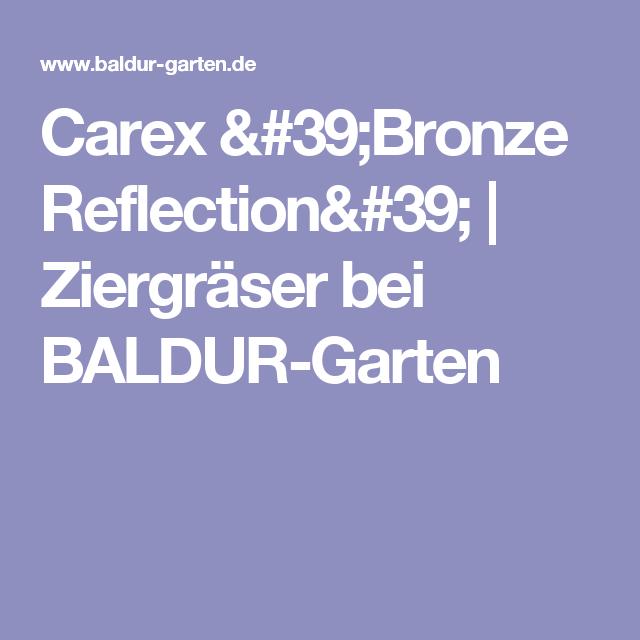 carex 'bronze reflection', 3 pflanzen | bronze, Best garten ideen