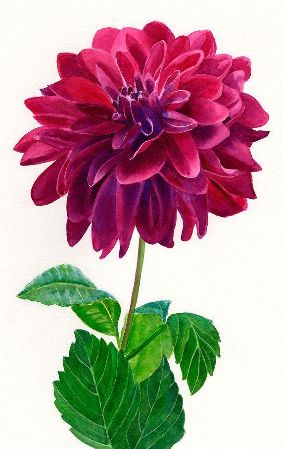 Burgundy Red Dahlia Blossom Watercolor Painting Flower Painting Botanical Painting Floral Painting