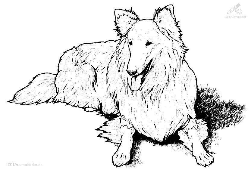 Malvorlage Hund   animal coloring   Pinterest