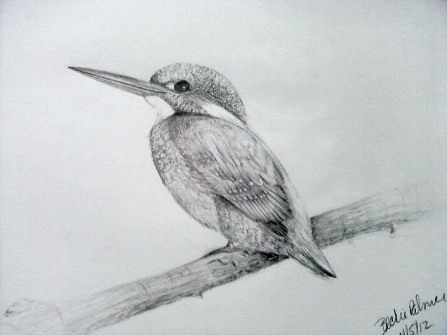 How To Draw A Bird Step By Step Easy With Pictures Birds