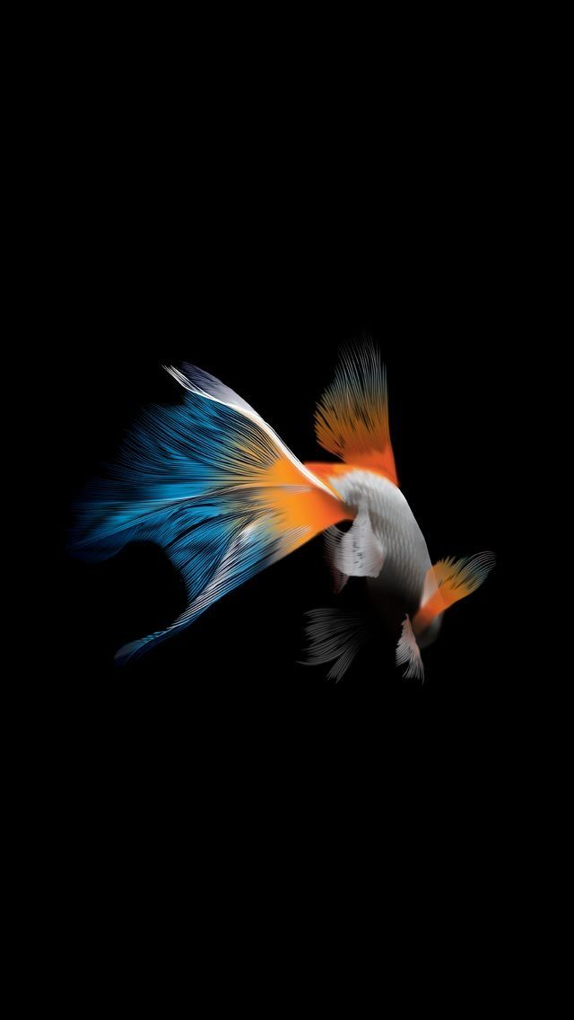Wallpapers Live Wallpaper Iphone 7 Apple Fish Mobile Android